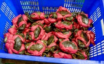 Cà Mau: Giá cua biển tăng đột biến sau Tết Nguyên đán