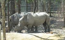 Vinpearl Safari Phú Quốc có 14 con tê giác đi mượn