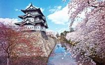 Hoa anh đào ở miền trung Nhật Bản