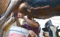 Không giảm giá thành, ngành sữa sẽ khó cạnh tranh