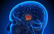 Phát hiện trung tâm kiểm soát cơn đau trong não