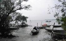 Khám phá rừng ngập mặn nguyên sinh Tam Giang