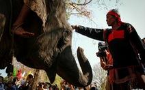 Lễ cúng sức khoẻ cho voi