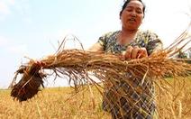 Có sai phạm trong hỗ trợ hạn, mặn cho nông dân