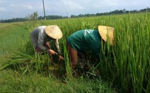 Giảm hơn 270.000ha đất trồng lúa vào năm 2020