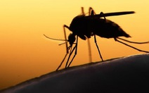 Brazil chi gần 140 triệu USD chống các bệnh do muỗi gây ra