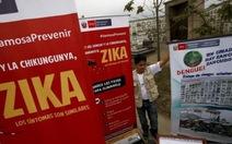 WHO khẳng định virút Zika gây bệnh đầu nhỏ