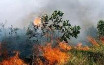 Hơn 200 người khống chế đám cháy rừng tràm ở An Giang
