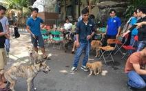 Phong trào nuôi chó H'Mông đuôi cộc sôi nổi ở Sài Gòn