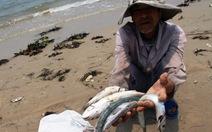 Cá chết hàng loạt ở miền Trung do nước biển ô nhiễm