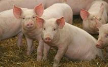 Sức khỏe của bạn: Nguy cơ gì khi ăn thịt nhiễm kháng sinh