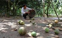 Không tổ chức lễ hội trái cây vì cây hết trái ngon
