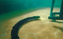Robot rắn sửa chữa thiết bị môi trường dưới đáy biển