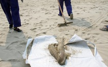 Điểm tin: Cá chết dạt tới Đà Nẵng, nghêu chết ở Hà Tĩnh