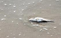 Đề xuất năm giải pháp xử lý hiện tượng cá chết
