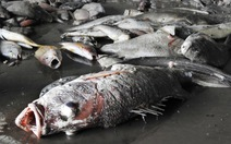 Hơn 10 đơn vị tìm lý do cá chết ra nhận định khác nhau