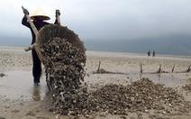 Cà Mau: nghêu chết, dân thiệt hại tiền tỉ
