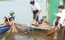 Hà Tĩnh hỗ trợ người dân có cá chết hàng loạt