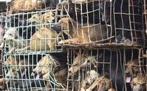 Trộm 16 con chó rồi thuê taxi chở đi tiêu thụ