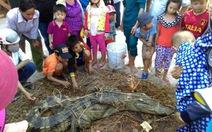 """Đã """"gô cổ"""" cá sấu sổng chuồng trên sông Soài Rạp"""