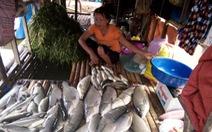 Cá tôm chết hàng loạt trên khúc sông Bưởi