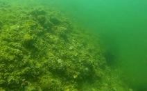 Biển Nhật Lệ cũng đìu hiu