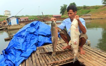 Chờ giám định, có thể khởi tố vụ xả thải làm cá chết