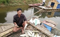 Sẽ đền bù hơn 1,4 tỉ đồng vụ cá lồng chết