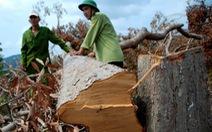 Ai đứng sau vụ phá hơn trăm hecta rừng tại Phú Yên?