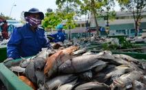 14 tấn cá chết, Nhiêu Lộc - Thị Nghè khác các kênh khác