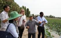 Bớt lúa trồng sen, không lo biến đổi khí hậu