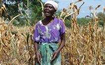 50 triệu người châu Phi đối mặt nạn đói vì mất mùa