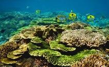 Ảnh biển cả Việt Nam lung linh nhận giảiMôi trường xanh