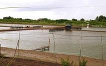 Cà Mau công bố thiên tai cấp độ 2 với nuôi trồng thủy sản