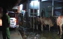 Bắt quả tang cơ sở giết mổ bơm nước vào bò