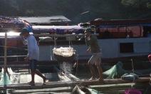 Tôm sông Đà - ăn để nhớ Phiêng Lanh