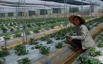 Người Sài Gòn lên núi trồng rau