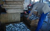 Điểm tin: Phát hiện chất cấm cực độc trong cá nục