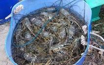Phú Yên thiệt hại 9,1 tỉ đồng vì thủy triều đỏ