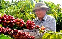 Giá cà phê cao nhất trong hai năm qua