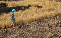 Biến đổi khí hậu làm trầm trọng tình trạng sa mạc hóa