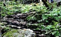Khai quật tại di chỉ hang Pác Đây, Lạng Sơn