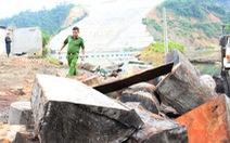 Mật phục bắt quả tang lâm tặc tàn phá rừng