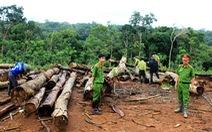 Bán cả rừng nguyên sinh dưới dạng rừng nghèo