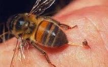 Cứu sống bệnh nhân bị ong chích nhờ sử dụng kỹ thuậtEcmo