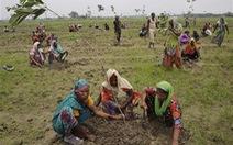 Ấn Độ trồng 50 triệu cây trong 24 giờ để lập kỷ lục thế giới