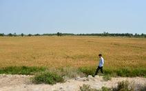 45% diện tích ĐBSCL có thể nhiễm mặn vào năm 2030