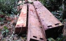 Để lâm tặc phá rừng, hàng loạt cán bộ bị kỷ luật