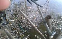 Cá chết trắng hồ Mật Sơn bốc mùi hôi nồng nặc