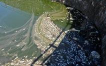 Cá chết hàng loạt ở hồ Đại Annghi do ô nhiễm nguồn nước